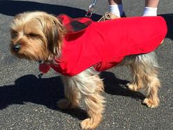 Red Buffalo Plaid Dog Coat