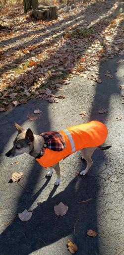 RWP Dog Coat Blaze Orange