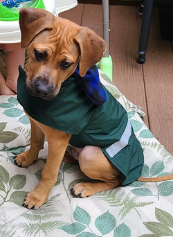 Captain in Forest Green Dog Coat