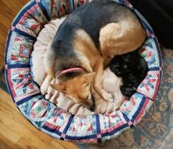 STAR PATCHWORK DOG & CAT_edited