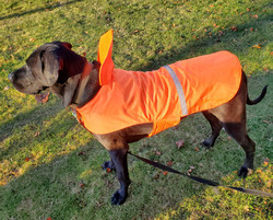 LOKI IN BLAZE ORANGE WATERPROOF DOG COAT