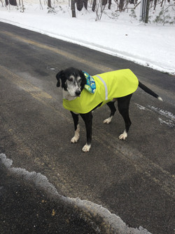 LADY IN LIME GREEN DOG COAT