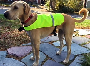 CHESTER IN SAFETY YELLOW SAFETY VEST