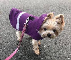 LUCY IN PURPLE WATERPROOF DOG COAT