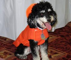 BOODLE IN Orange Raincoat