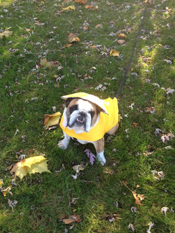 WP Coat Yellow
