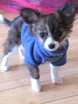 MANNY IN BLUE FLEECE PULLOVER SWEATER