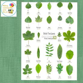 British Tree Leaves