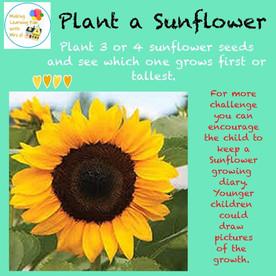 Plant a Sunflower