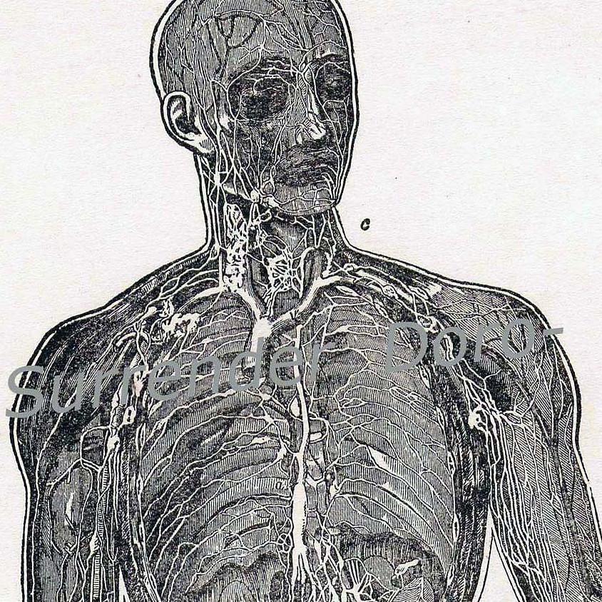 Clinically Applied Anatomy