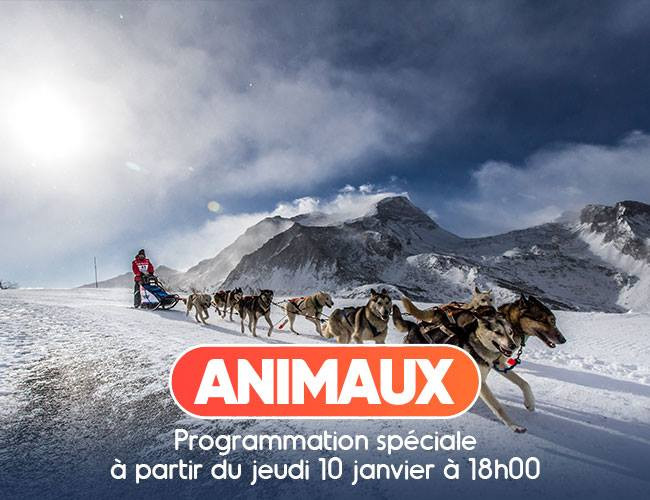 Partenaire La Grande Odyssée Savoie Mont Blanc :Animaux TV