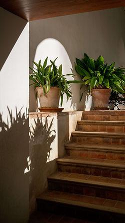 Mediterrane tuin.jpg