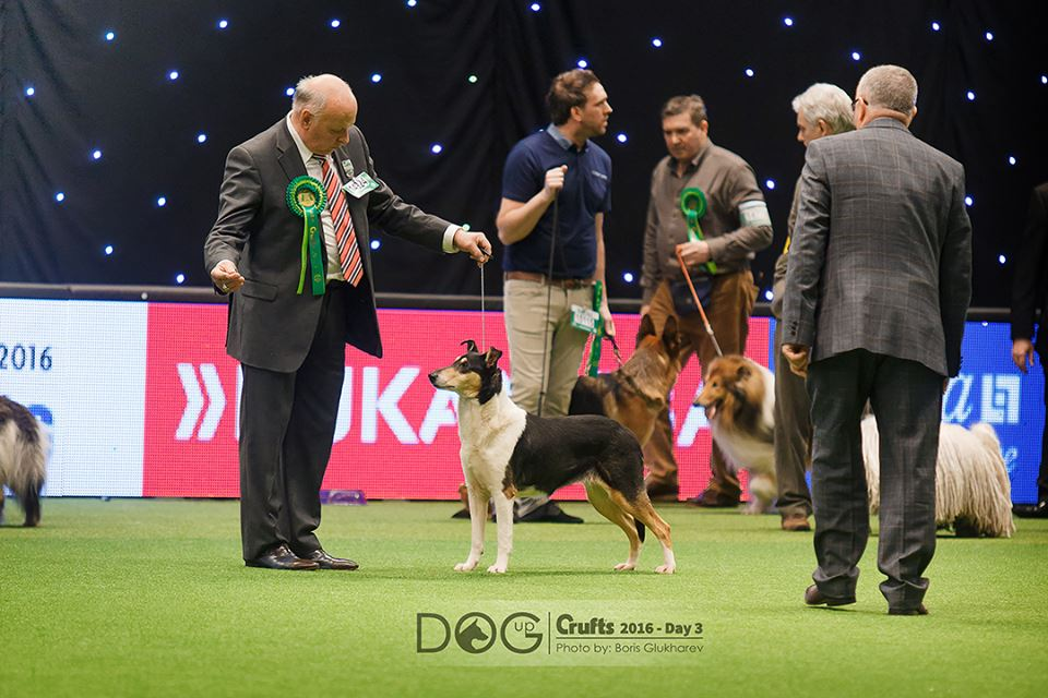 C.Hot Chot BOB at crufts 2016