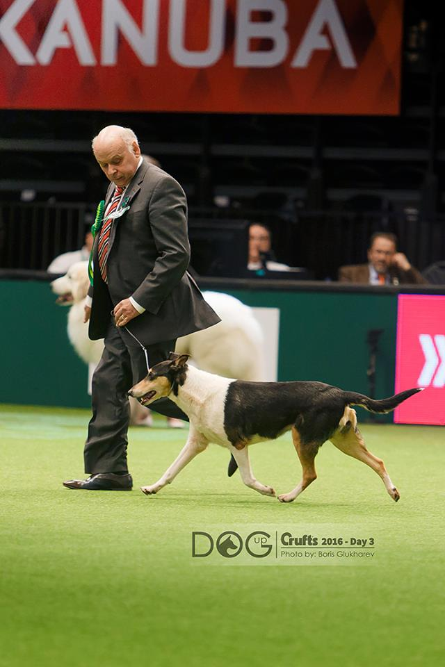 C.Yjt Shot BOB at Crufts 2016