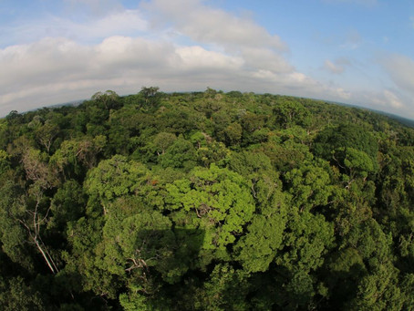 Amazonas adere à campanha global para zerar emissões de gases de efeito estufa até 2050