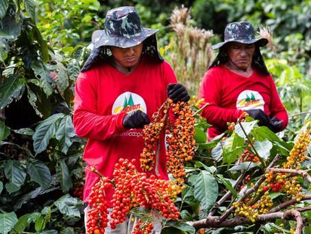 Farinha e pirarucu lideram economia sustentável, que produz comida saudável na floresta