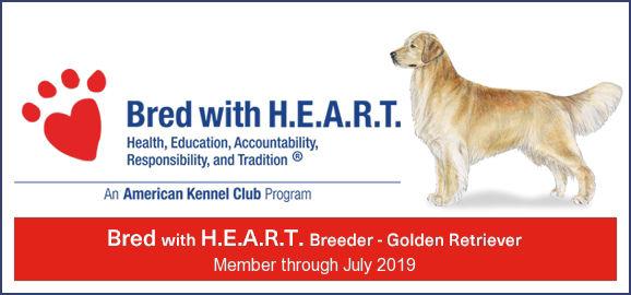 Golden Retriever Breeder California | United States | Sunrise Goldens