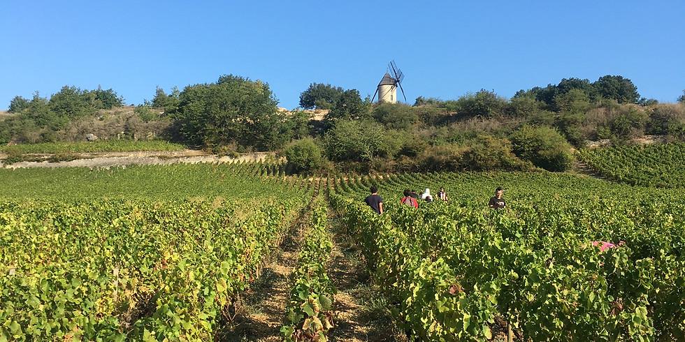 Burgundy versus the world