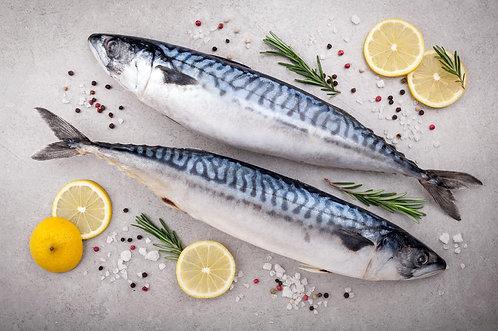Atlantic Mackerel whole round 450/550g (5 units) 2.25/2.75kg (R70/kg)