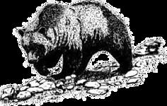 медведь копия.png