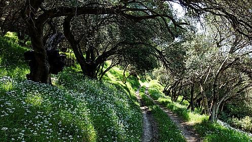 Corfu Trail 3.jpg