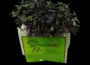 New Product_14/09/2020 - Red Living Herbs