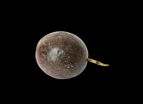 New Product_20/09/2020 - Passionfruit