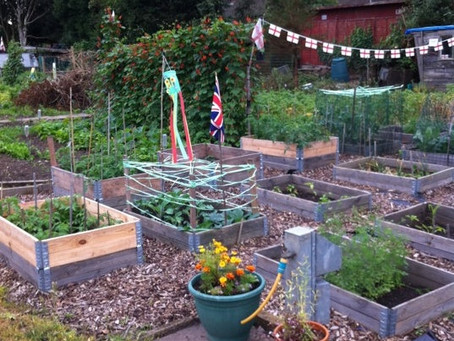 SUPPORTING US - THORNBRIDGE AVENUE ALLOTMENTS