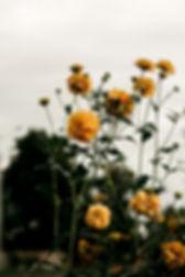 beautiful-blooming-blossom-1420016_edite