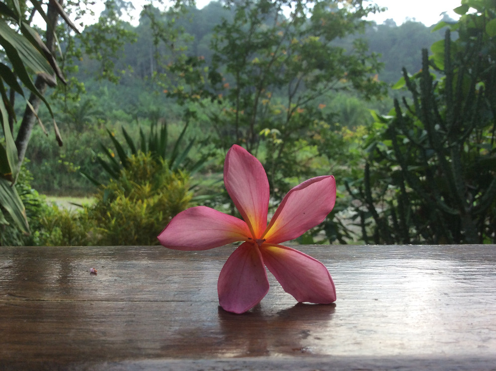 flower view from bungalow porch.JPG