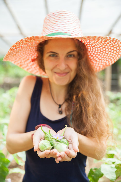 THE FOOD FOREST PROJECT: a perma culture  gardening experience