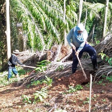 Planting 5.000 trees!