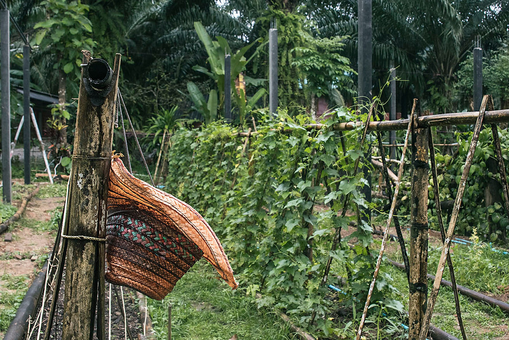 Eco-Logic gardening: visit our veggie garden an leran about a biological and ecological way of growing local vegetables.