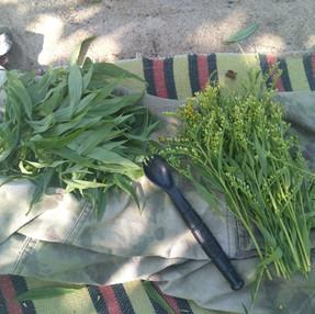 Rośliny jadalne - Survival.