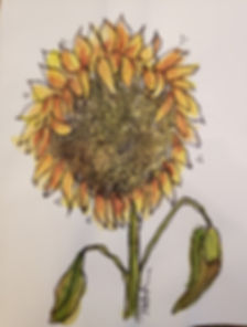 Sunflower-klausner.jpg