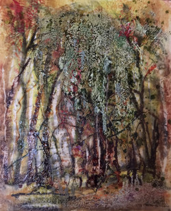 Birch Wood by Mel