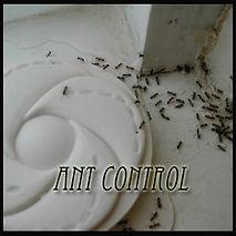 manila fly control