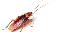 How to Control Cockroach in Your Condo Unit Without Breaking the Bank