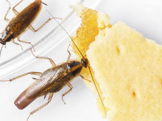 Nine Things Every First Time Pest Control Customer Should Know About