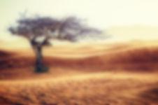 desert-2227962_1920.jpg