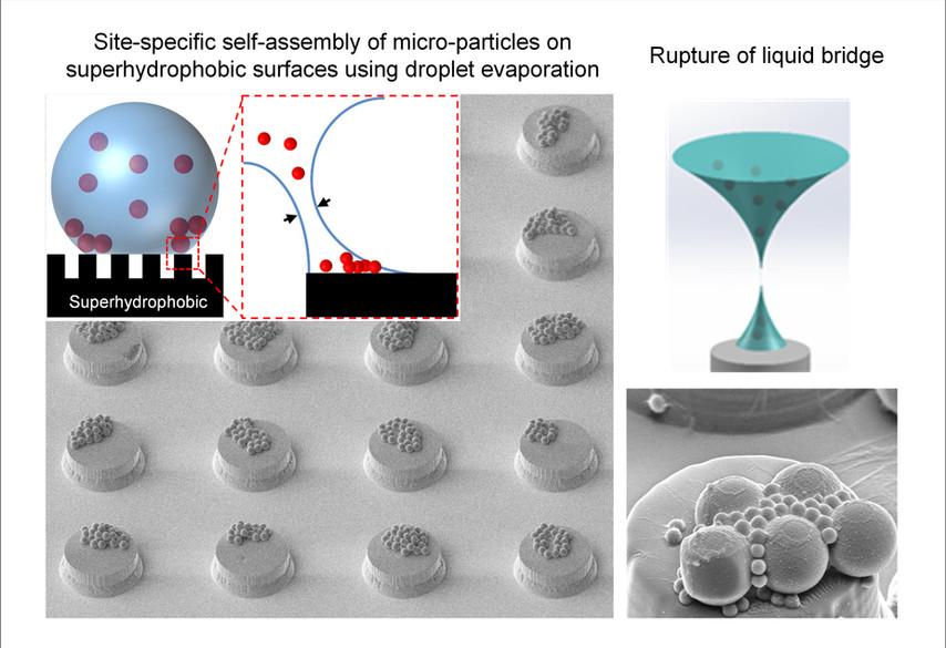Droplet-Assisted Self Assembly