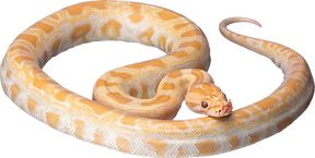 white-snake-png-15.png
