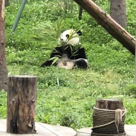 Cute Panda Movie