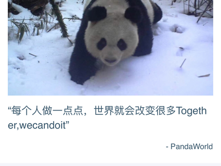 PandaWorld Raised Over $6,000 Through China's National Giving Day Event