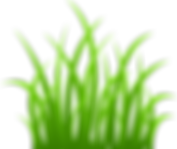 5-grass-png-image-green-grass-png-pictur
