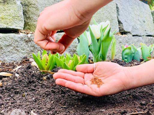 Let it grow! Wie du eine nachhaltige Grundlage für dein Wachstum schaffst