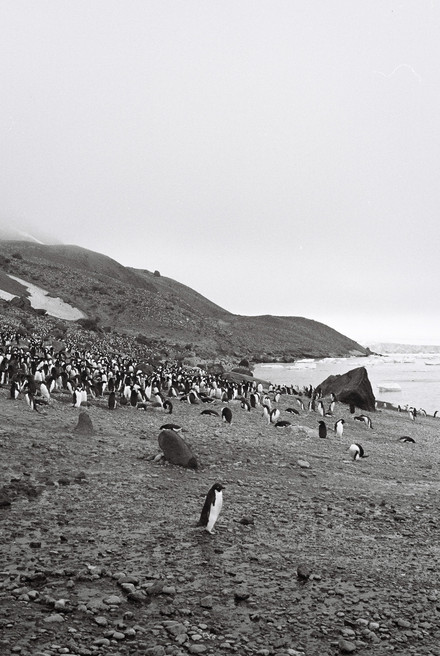35mm Antarctica Film - For Web 72dpi-37.