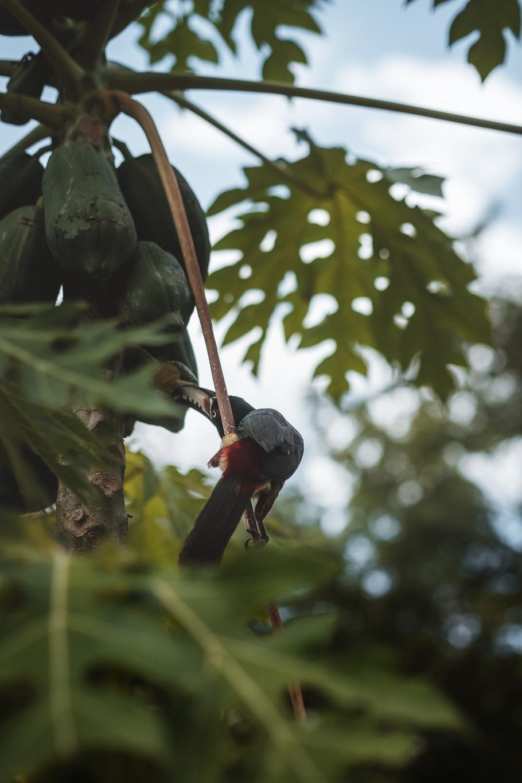 Guatemala - For Web 72dpi-6.jpg