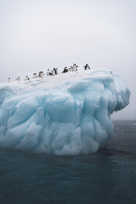 Antarctica Film - For Web 72dpi.jpg