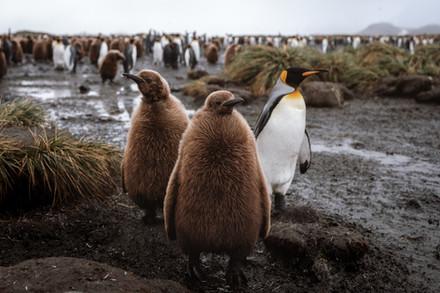 Antarctica Film - For Web 72dpi-2.jpg